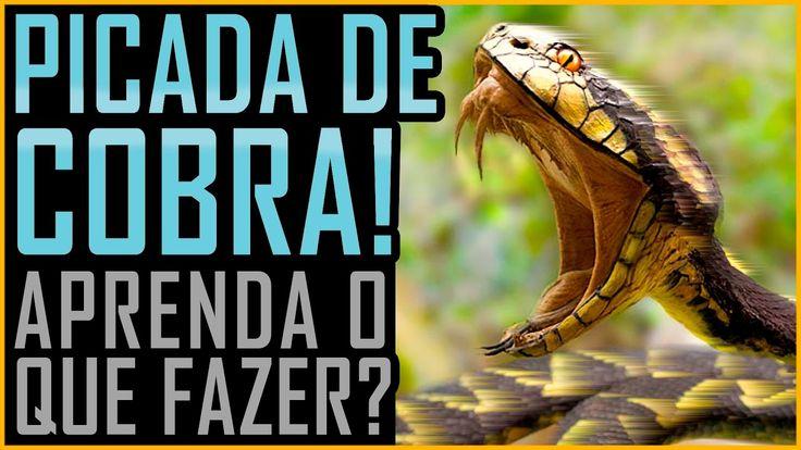 Picada de Cobra - O que Fazer - (Butantan / Venenosa / Peçonhenta)