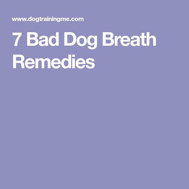 7 Bad Dog Breath Remedies