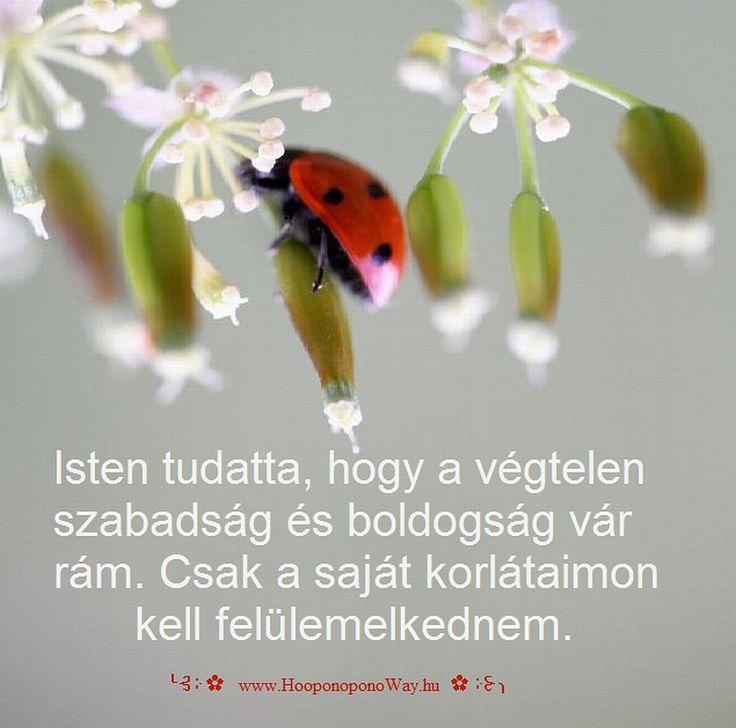 Hálát adok a mai napért. A Nagy Utazás... Isten teremtett hozzá távlatokat és lehetővé tette, hogy szárnyaljak. Tudatta, hogy a végtelen szabadság és boldogság vár rám. Csak a saját korlátaimon kell felülemelkednem. Így szeretlek, Élet!  ╰⊰⊹✿ Köszönöm ♡ Szeretlek εїз Ho'oponoponoway ✿⊹⊱╮ www.HooponoponoWay.hu