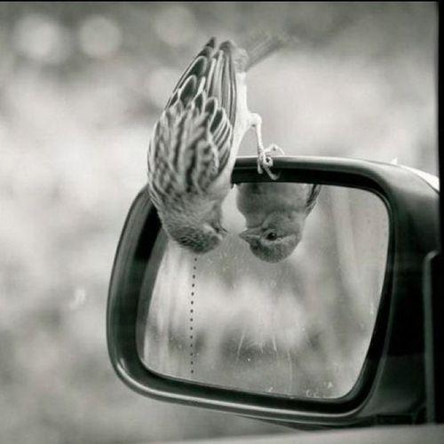 #bird #photo