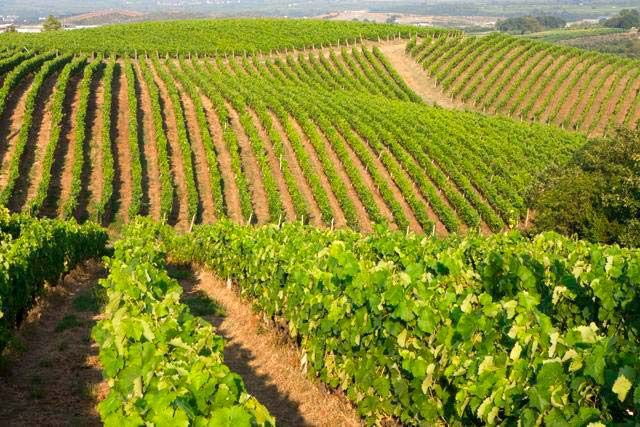 The activities of the Kir-Yianni Estate are entirely based on the principles of integrated farming.