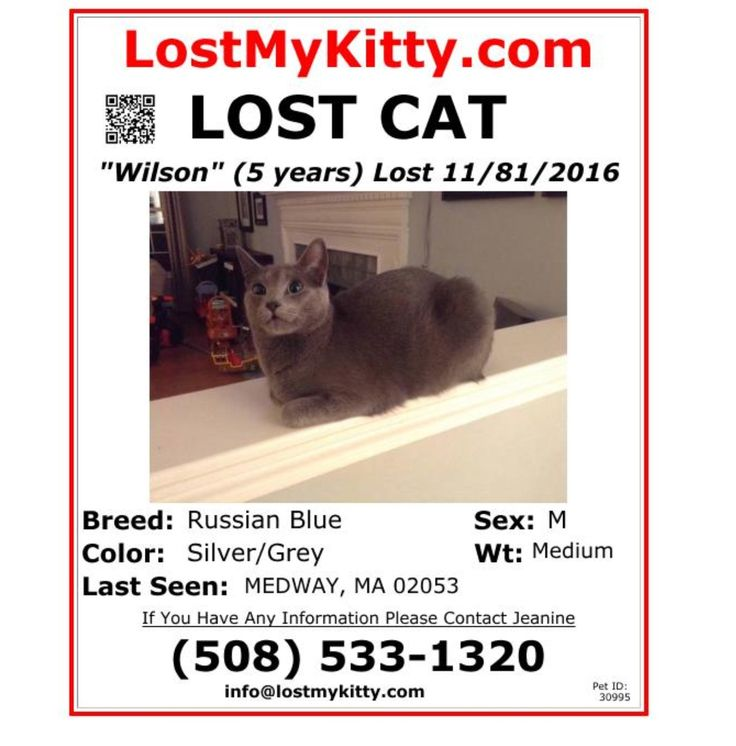 Lost Cat Named Wilson: Medway, MA