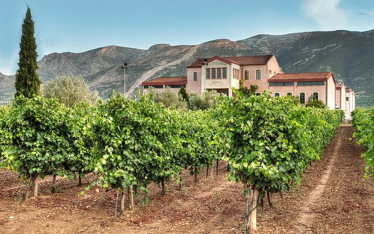 Vineyards of the Peloponnese: Visiting the Source - Greece Is