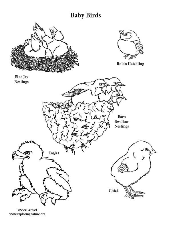 Baby Birds Coloring Page In 2020 Bird Coloring Pages Coloring Pages Color