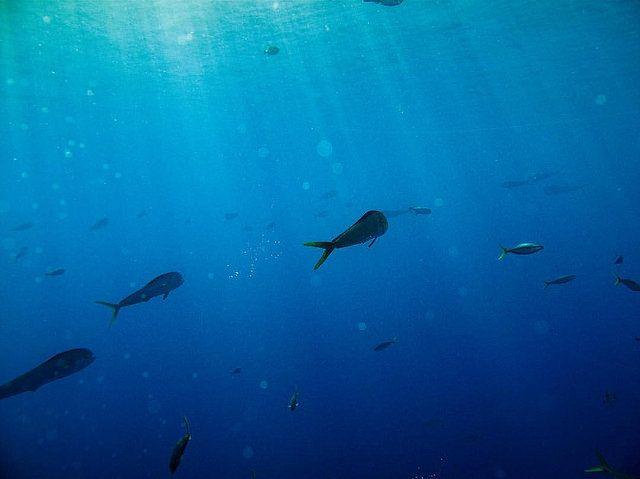 Plastic Debris And Pelagic Fish: A First Look