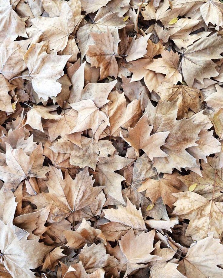 neutrals.quenalbertini: Fall leaves | Ana Rosa