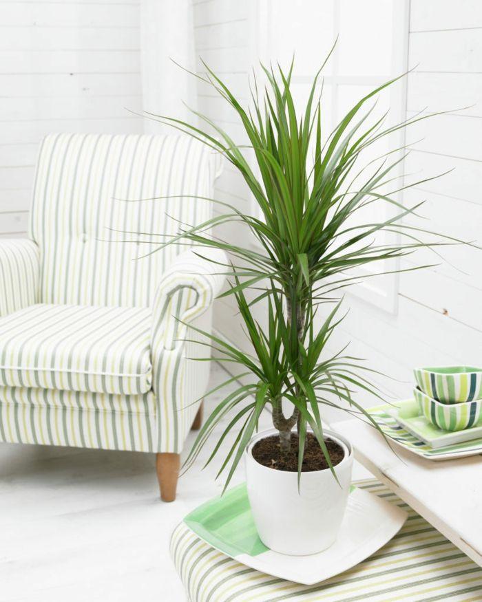 schatten pflanzen zimmerpflanzen wenig licht