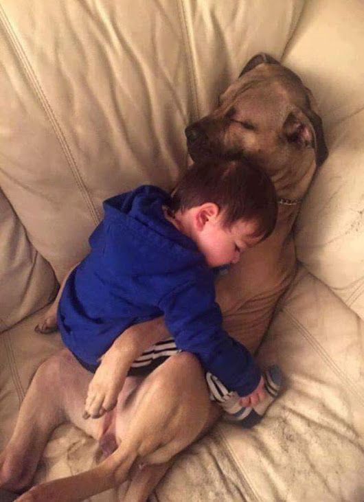 Children and Pets are the best parts of our lives! Giving them a healthy place to live should always be a priority. We provide Green Certified, Kid Safe, Pet Safe Carpet Cleaning that Dries in 1-2 hours! We are your local Pet Urine Removal Experts! We eliminate 99.9% of odors and 99.2% of bacteria from Pet Deposits, leaving your carpets fresh and healthy! We have an A+ Rating with the Better Business Bureau, a 5 Star Rating on Google, and All 5 Star Reviews on Facebook. Call Today…
