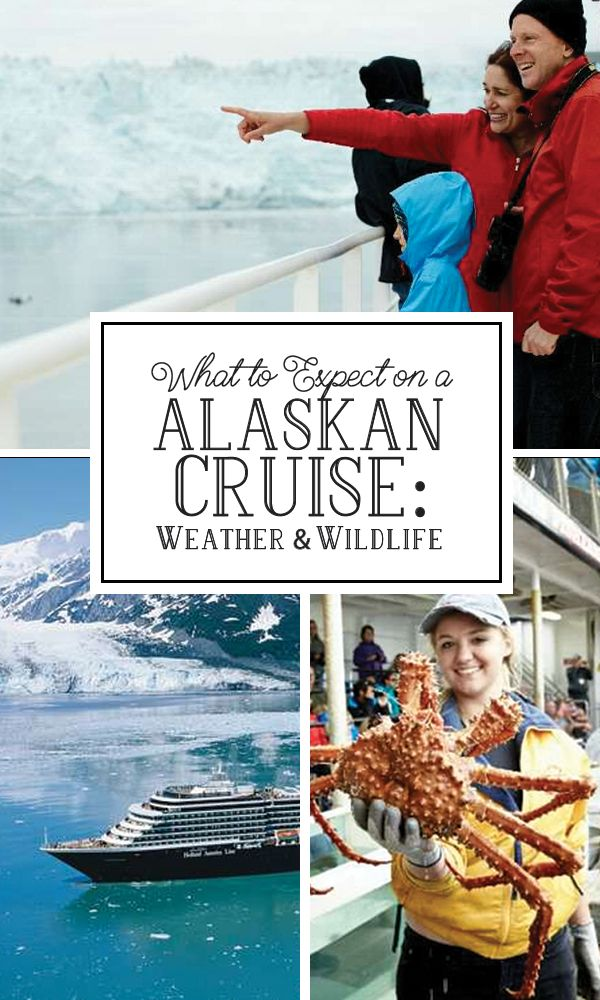 Alaska's reputation for being cold, snow packed and filled with bears is only true if you venture deep inland. On your cruise, you might just be surprise to find weather warmer than winter in the rest of the US! Click to read more!