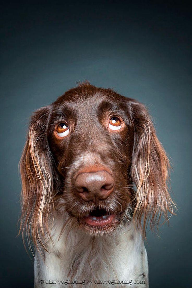 Dog Portraits – Quand une photographe capture la personnalité des chiens