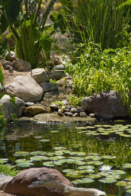 by The Pond Gnome, via Flickr