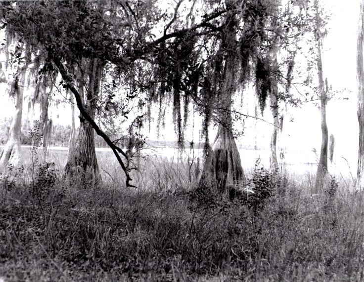 Lake Louisa State Park, Florida