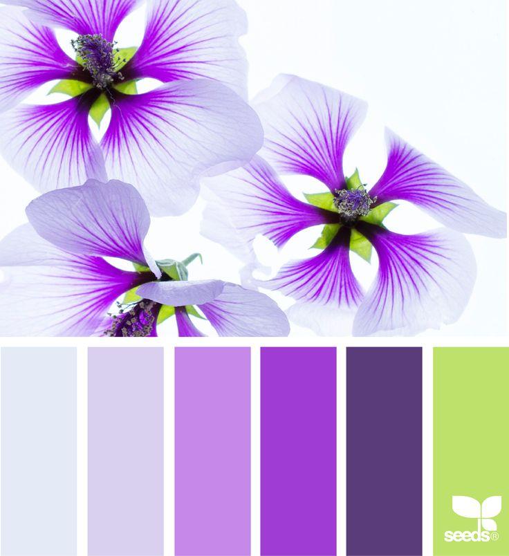 Flora Brights via @designseeds