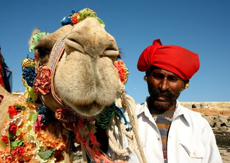 Pushkar camel fair - Rajasthan, India
