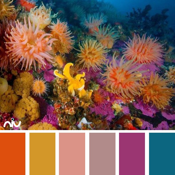556 best color palette images on Pinterest | Photography ...