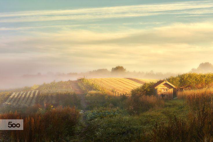 Misty morning by Sebastian Rudnicki on 500px