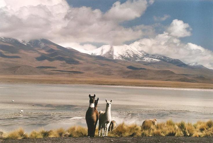 Border Chile-Bolivia