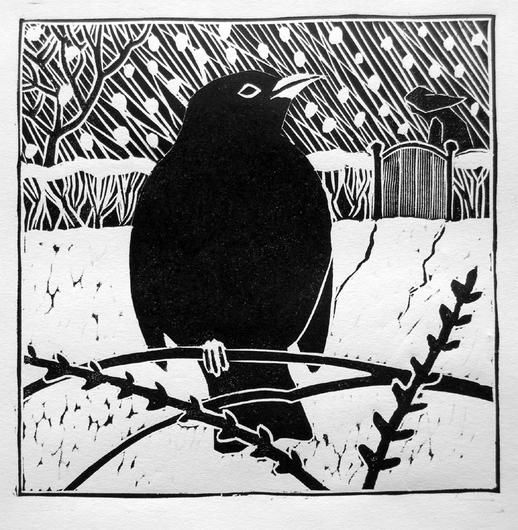 Winter blackbird © Lisa Hooper