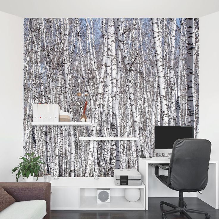White birch trees wall mural wallums bedroom ideas for Birch wall mural