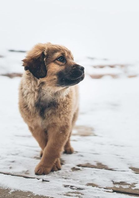 Perfectly posing puppy <3