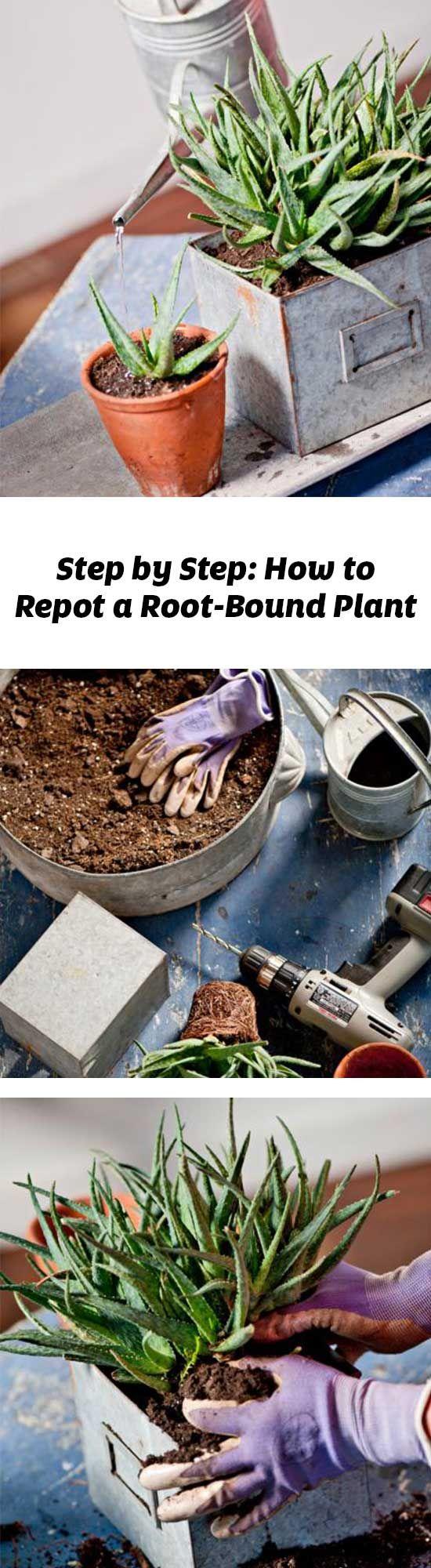 501 best Garden Ideas Garden Design images on Pinterest Easy