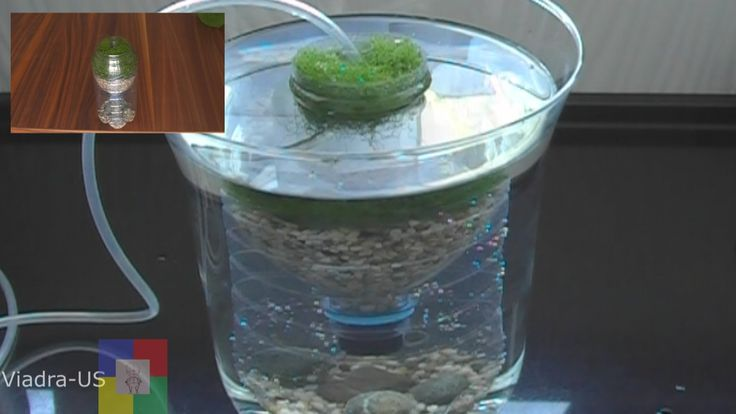 DIY Aquarium filter : testing a prototype biofilter / Air Driven Filter #
