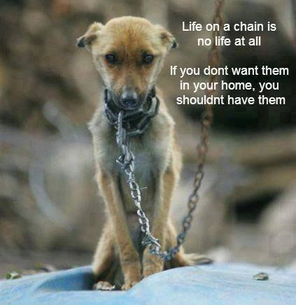 Image result for be kind to animals