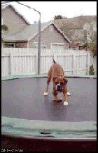 If you are having a bad day, just take a look at this adorable dog jumping on a trampoline.