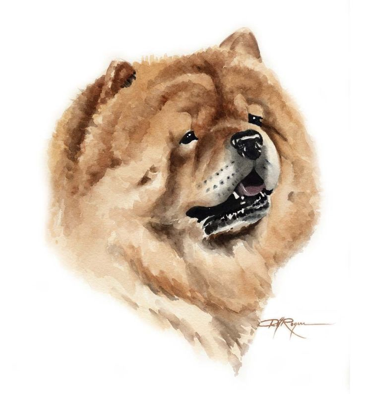 CHOW CHOW Dog Art Print Signed by Artist DJ Rogers by k9artgallery