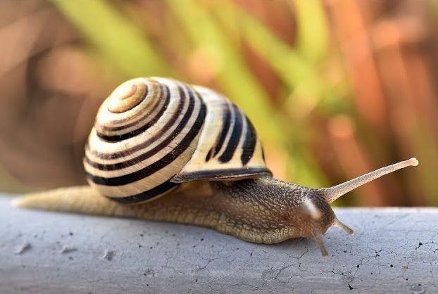 أبرز تفسيرات ابن سيرين لحلم الحلزون في المنام موقع مصري In 2021 Fun Facts About Animals Snail Animal Facts