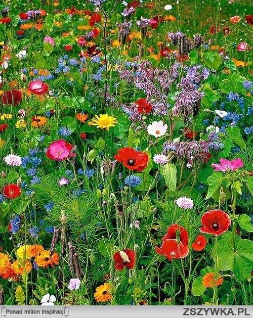 polne kwiaty cud natury