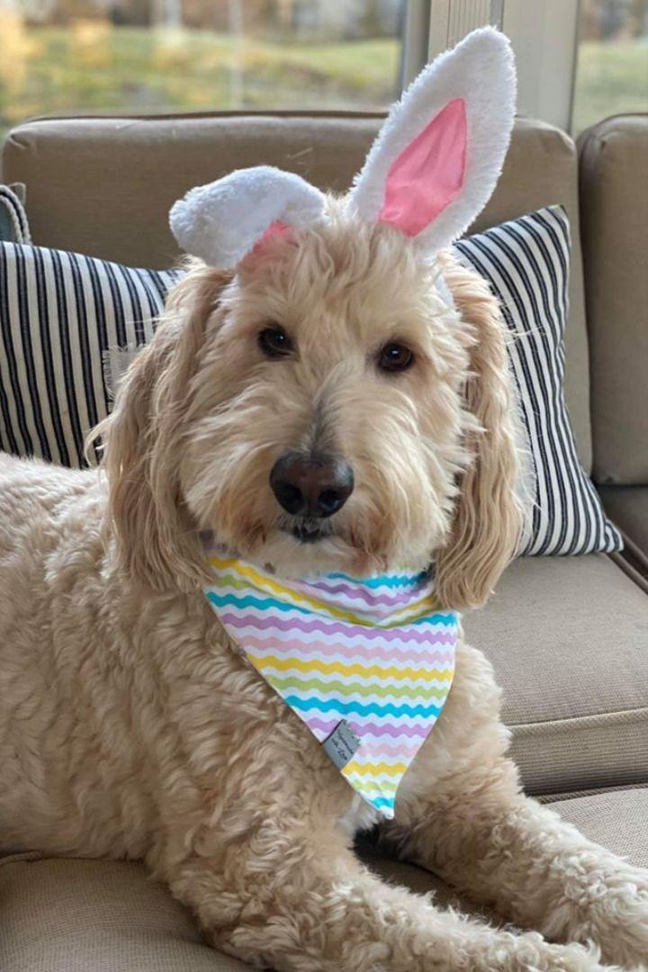 dog cat Reversible pet bunny  bandana