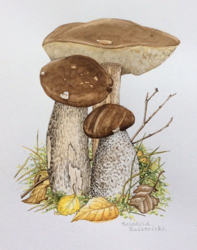 http://www.soc-botanical-artists.org/members/images/Raistrick-mushrooms-500.jpg