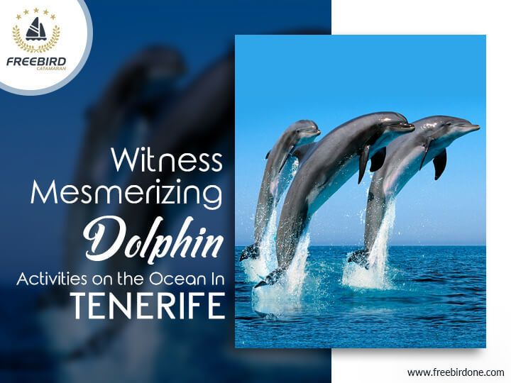 Must Visit: Here are 7 things you must know about the weather in Tenerife    #Tenerife #weather #whale #tourism