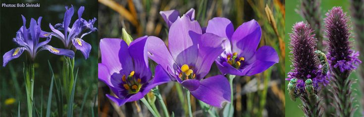 the native plant society of new mexico  npsnm  is a non