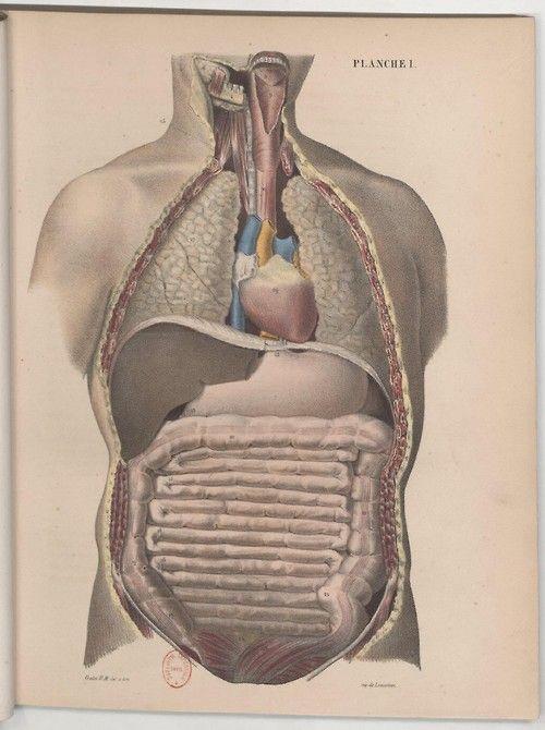 127 Best Body Mechanics Images On Pinterest Human Anatomy Human