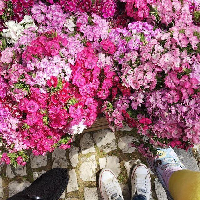 Weekend blooms 🌺🌸 (mercado de almoçageme)