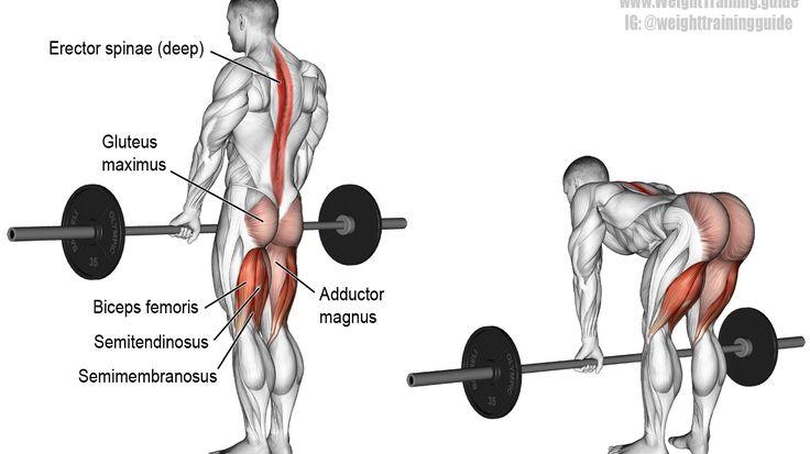Barbell straight back stiff leg deadlift exercise