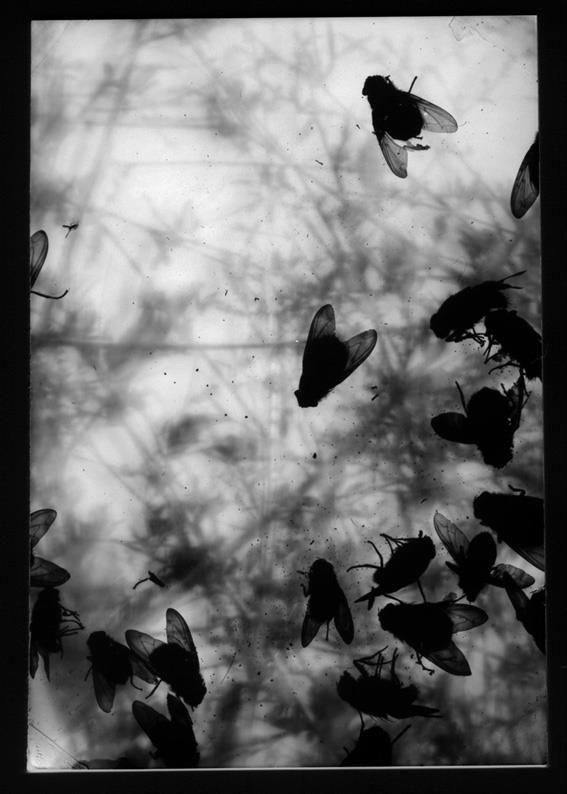 fly 02 - camera obscura / photogram - 2011 ©péter tóth