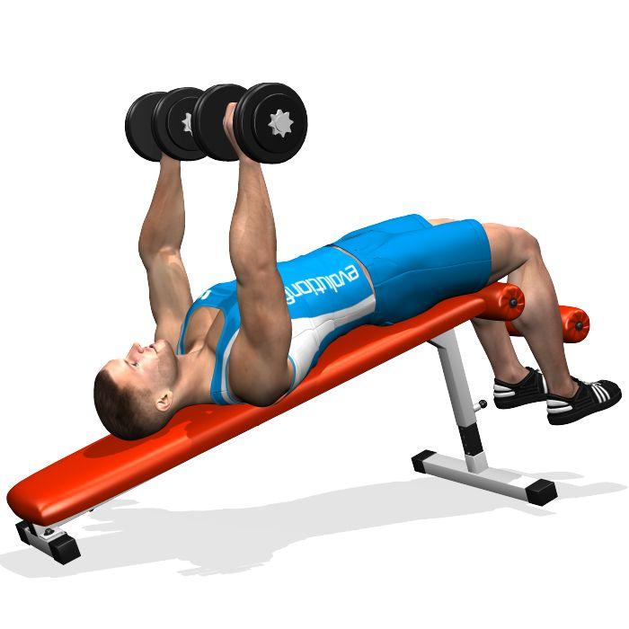 Le développé décliné aux haltères travaille sur la zone basse du grand pectoral. Durant la phase de descente, l'allongement focalise l'extension sur la partie extérieure du grand pectoral. Les triceps et la partie antérieure des deltoïdes sont aussi impliqués dans cet exercice.