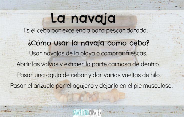 La navaja como cebo para pescar #doradas   http://www.barcelonacharter.net/  #pesca   #barcelona   #consejos   #cebos