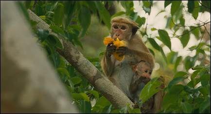 "Disney Releases Trailer for ""Monkey Kingdom"""