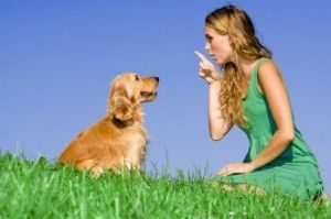 Commands for a Therapy Dog