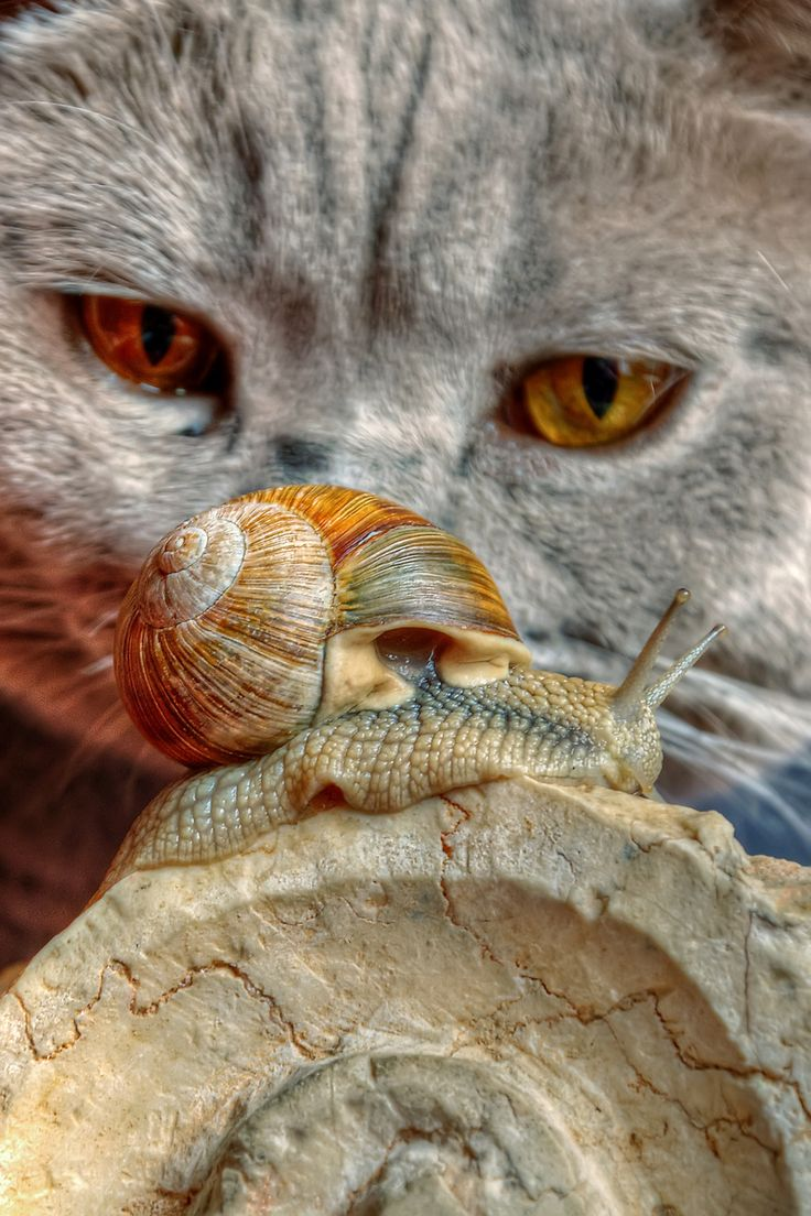 .Cats, Snails, Animal Fotos, Adorable Friends, Shared Moments, Chat, Kitty, Cat Cinema, Adorable Animal