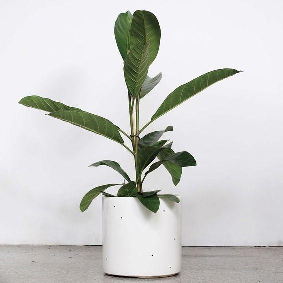 flowerpots large/ dots - FOR.REST -