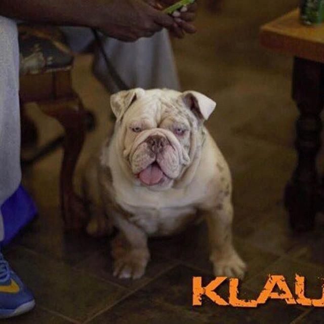 Fantastic Bulldog Dogs Information Is Offered On Our Site Read