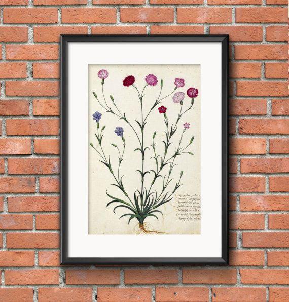 Carnation brush botanical print printable artwall decordigital downloadvintage printprintable clipart instant download flower print