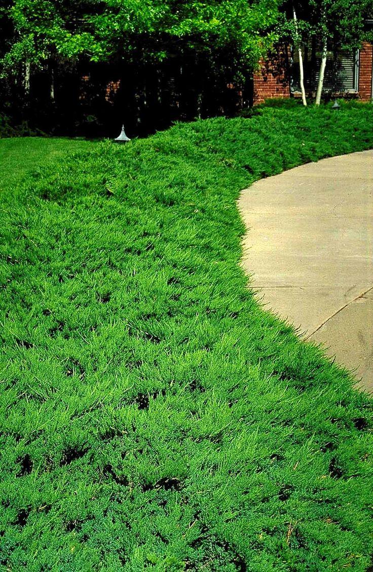 44 best shrubs i gotta have images on pinterest shrubs flowers