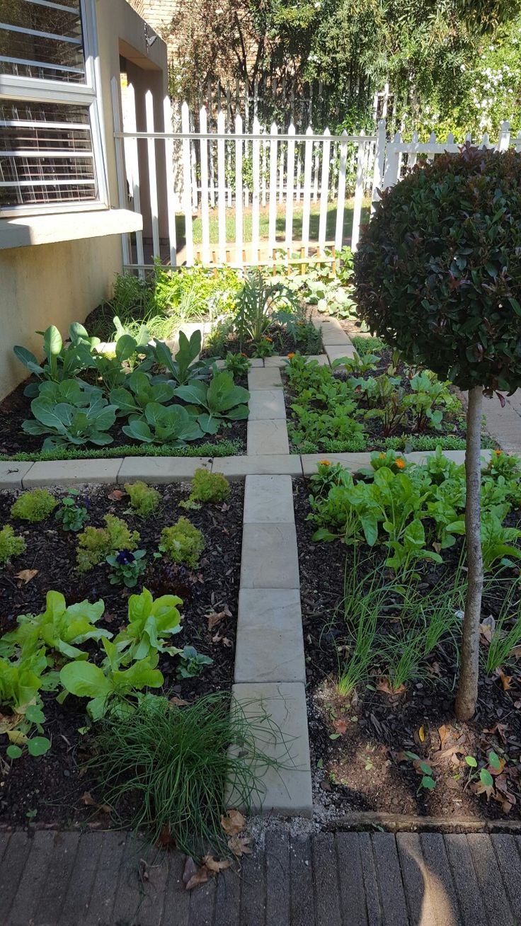 Potager layout