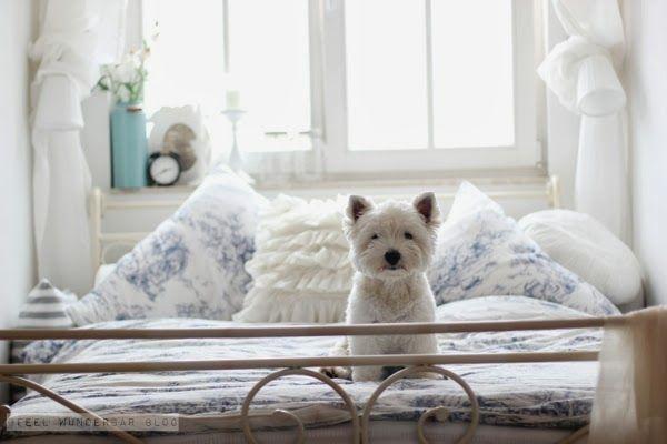 Du kleiner Schatz, hast dir aber einen sehr schönen Schlafplatz ausgesucht!  Nun aber auch hinlegen und schlafen!